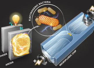 Technique identifies electricity producing bacteria